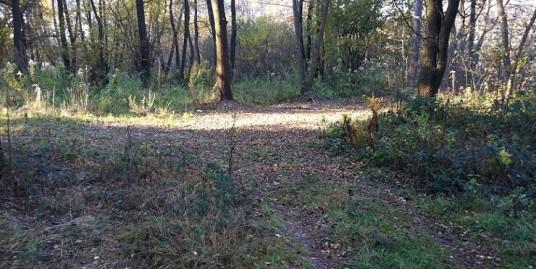 Rekreačný pozemok v lese na Záhorí, 6 000m2