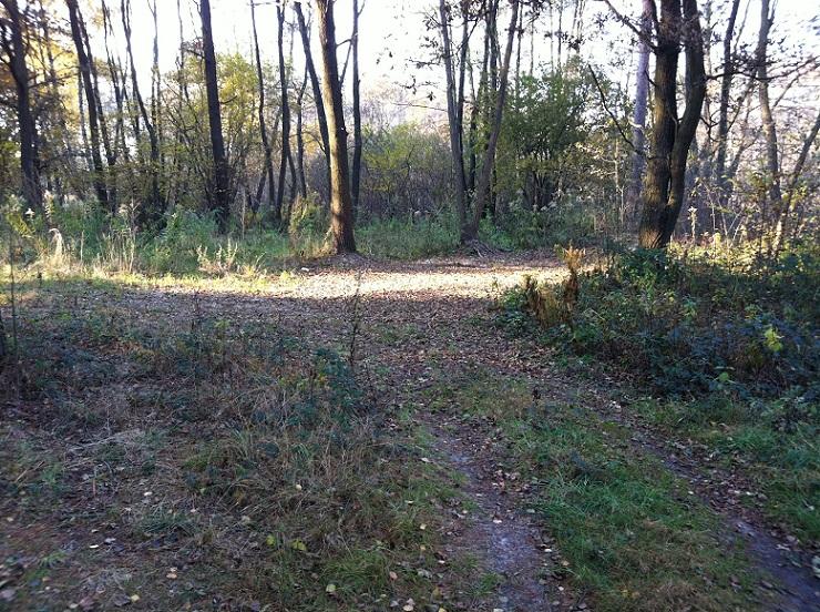 Rekreačný pozemok v lese na Záhorí – 5200m2